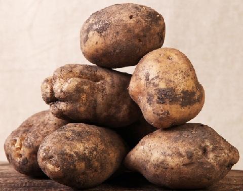 """Картофель """"лорх"""": описание сорта, характеристики и фото русский фермер"""