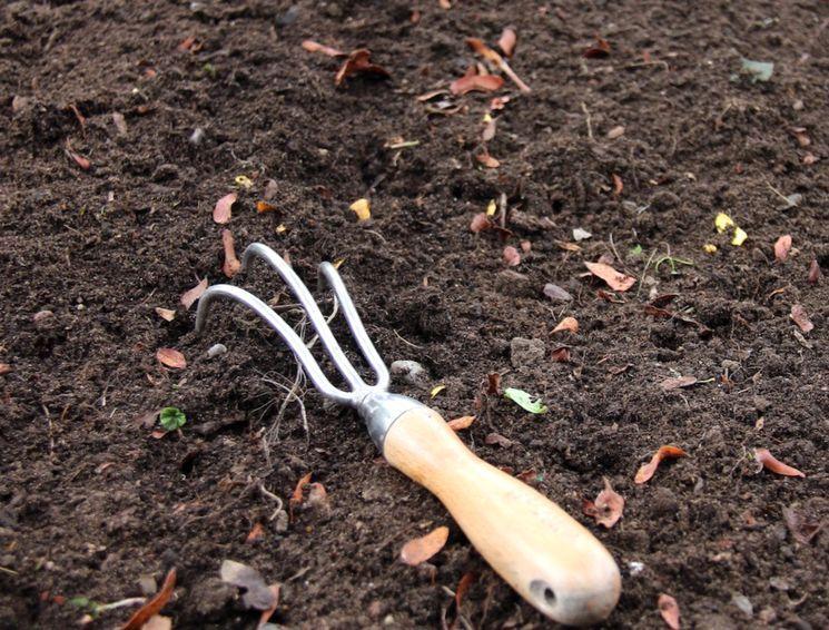 Как подготовить грядку и чеснок для осенней посадки. все преимущества посадки чеснока под зиму: сроки и технология