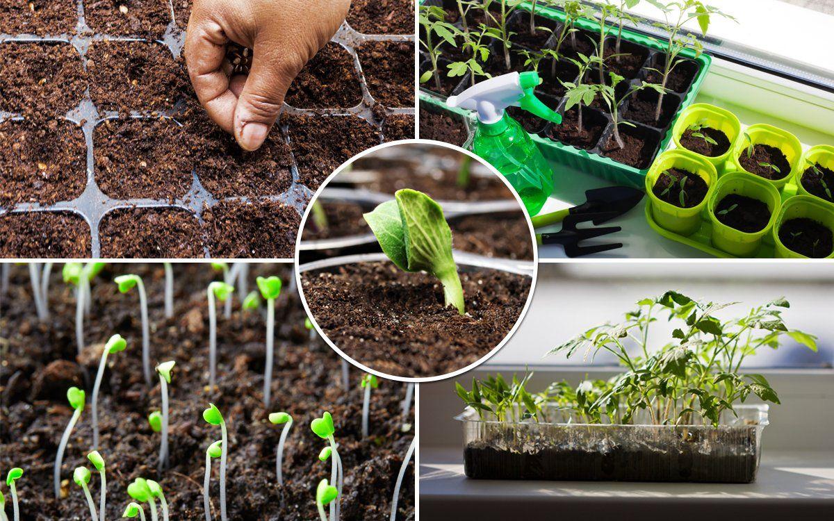 Когда садить помидоры на рассаду в украине в 2021 году по лунному календарю: таблица благоприятных дней и особенности выращивания