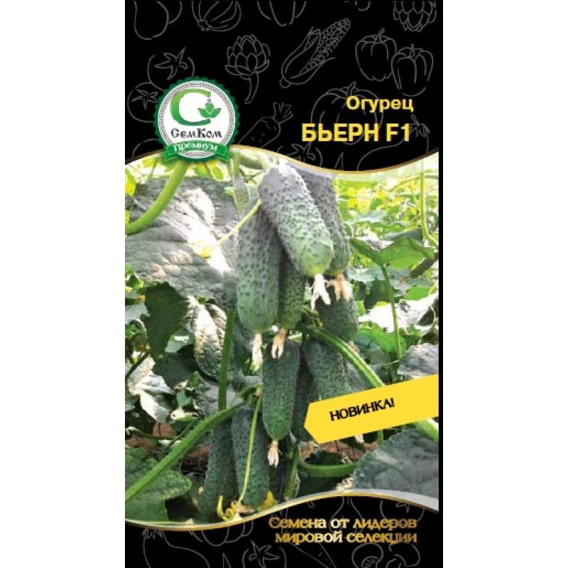 Характеристики и особенности выращивания гибридного сорта огурцов «бьерн f1»