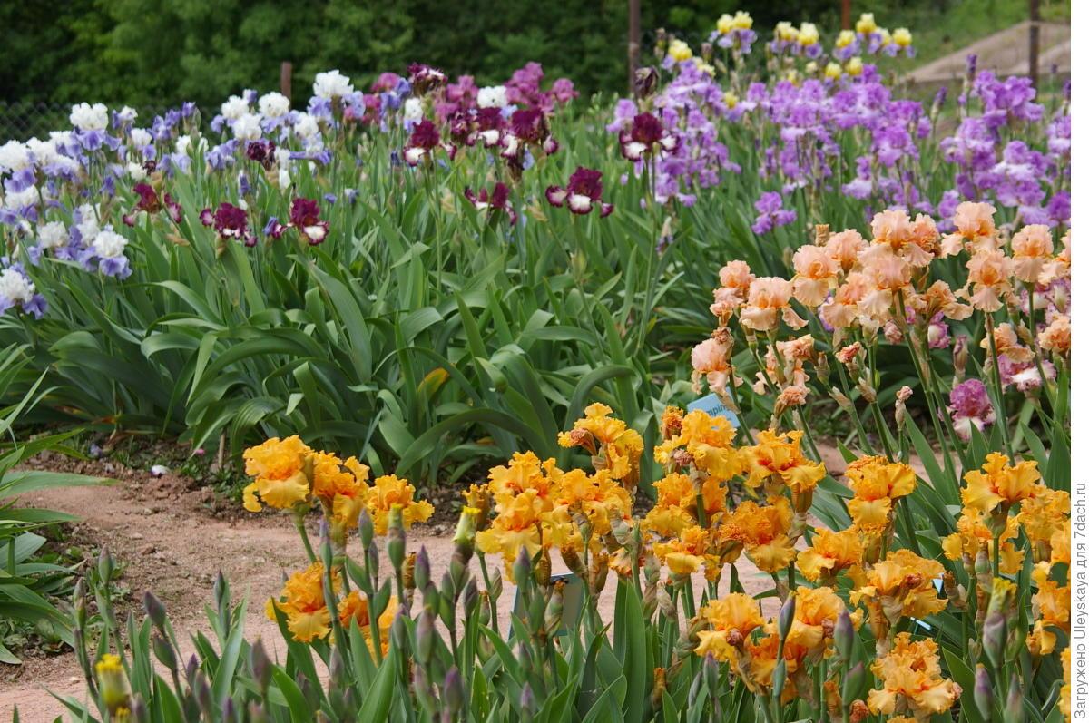 Какие цветы нельзя сажать рядом: неудачные сочетания цветов, растения-агрессоры | огородники