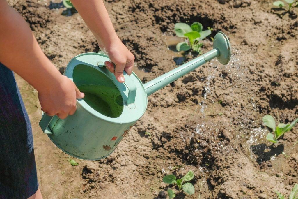 Подкормка огурцов в открытом грунте и теплице: когда и чем удобрять для урожайности, эффективные средства