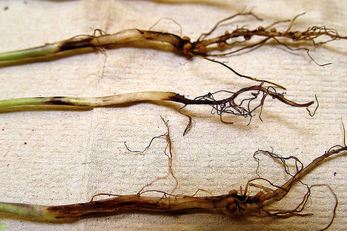Лечение пародонтоза в домашних условиях | компетентно о здоровье на ilive