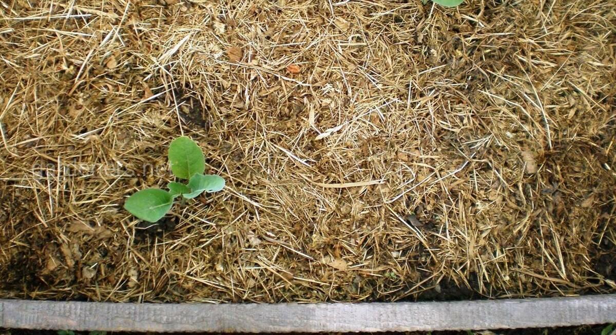 Для чего посыпают грядки опилками: можно ли мульчировать свежими почву и добавлять их между рядами?