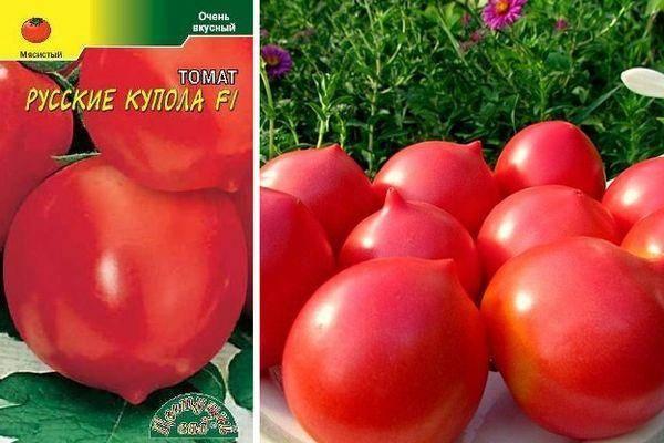 """Томат """"факел"""": описание и характеристики сорта помидор, рекомендации по выращиванию и фотографии плодов русский фермер"""