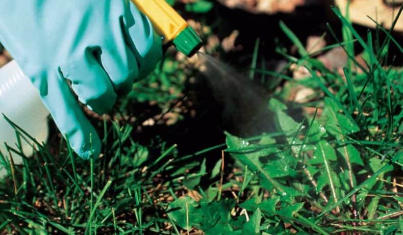 Обработка от вредителей: чем опрыскать сад и огород, препататы