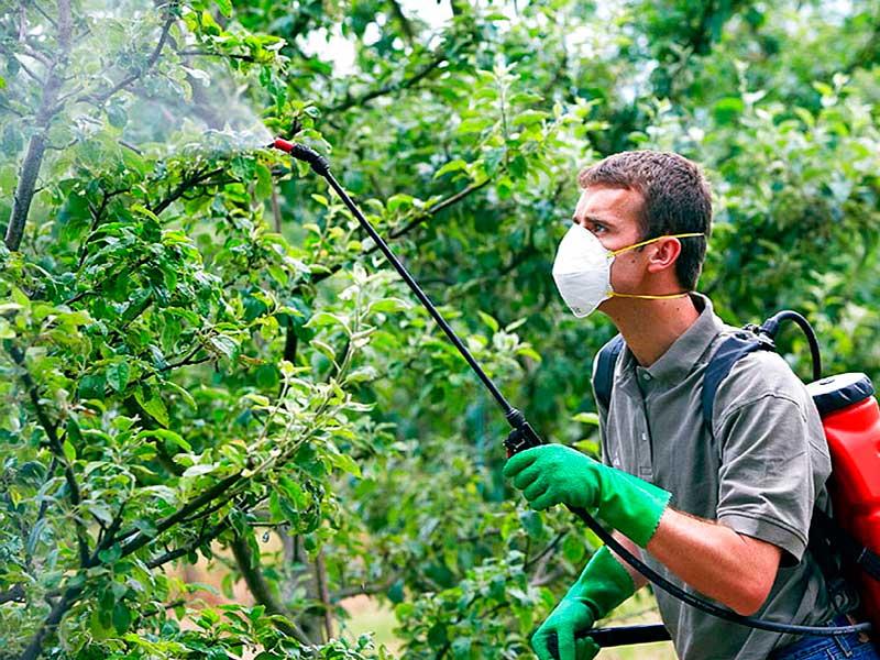 Разнообразные методы борьбы с вредителями сельскохозяйственных культур - советы от лигногумат | москва
