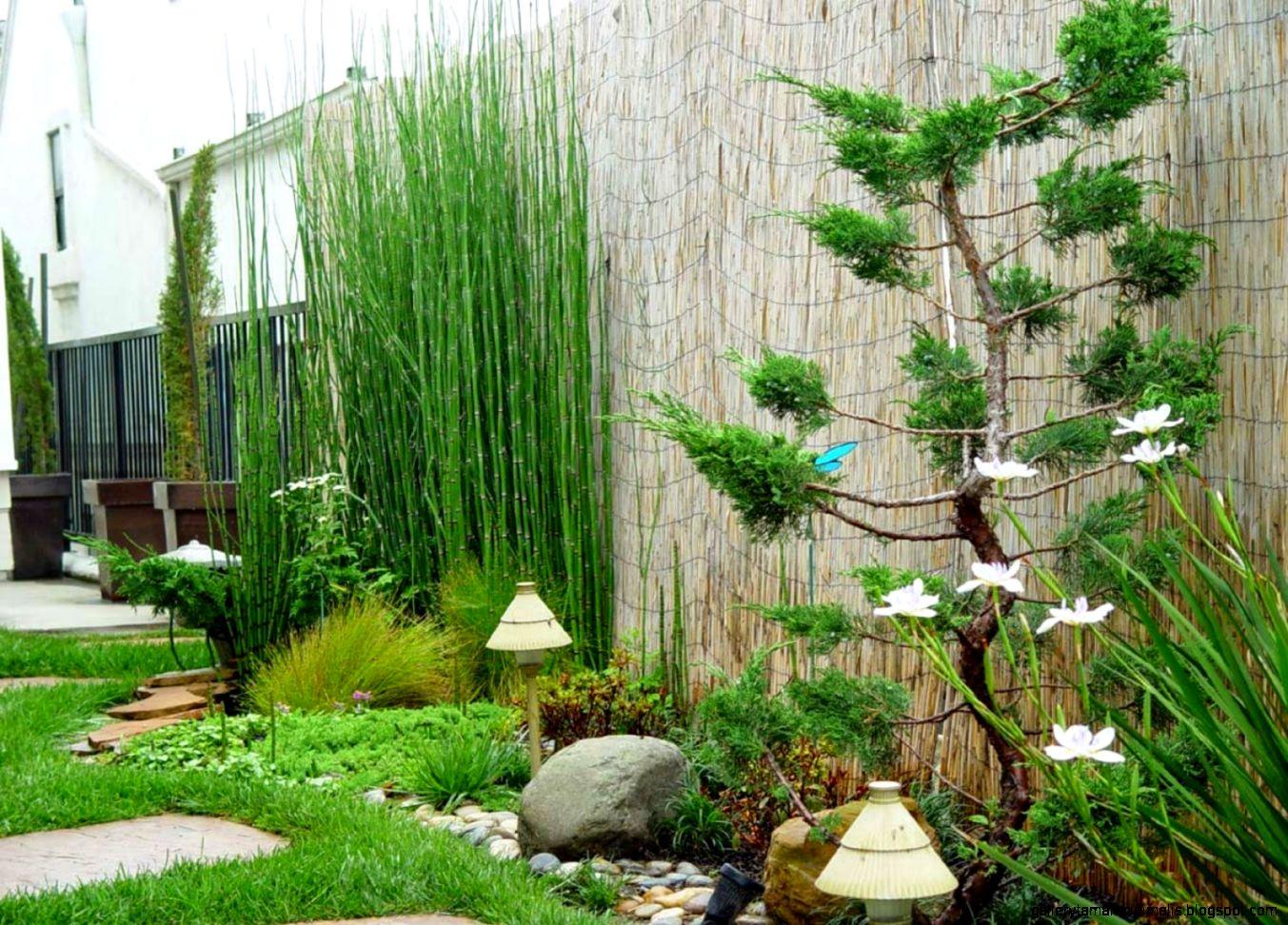 Декоративная трава и злаки для сада в ландшафтном дизайне: морозоустойчивые растения для клумбы  - 21 фото