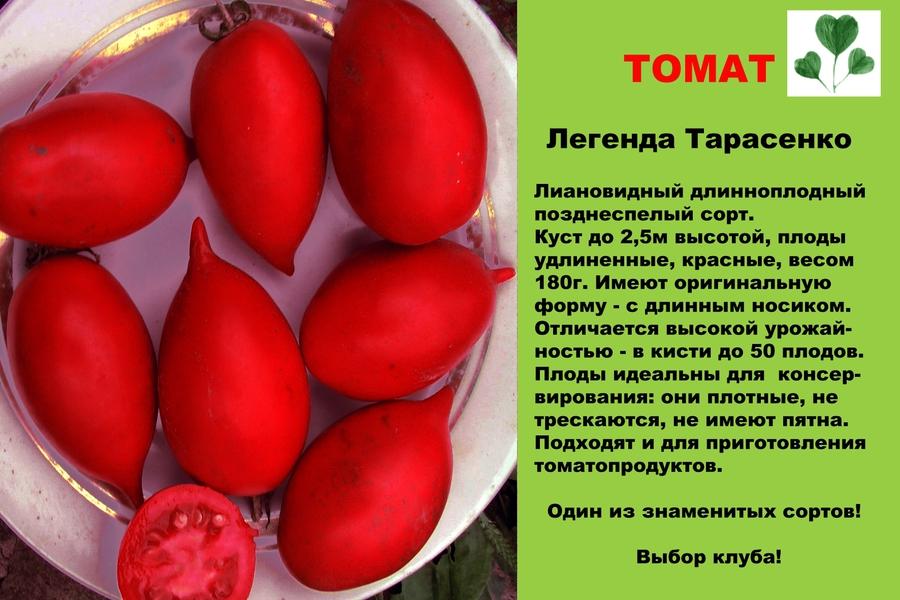 Сорт томат «легенда тарасенко» (мультифлора): отзывы, фото, урожайность