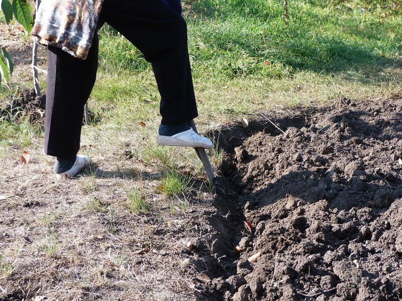 Нужно ли осенью перекапывать землю в огороде: за и против