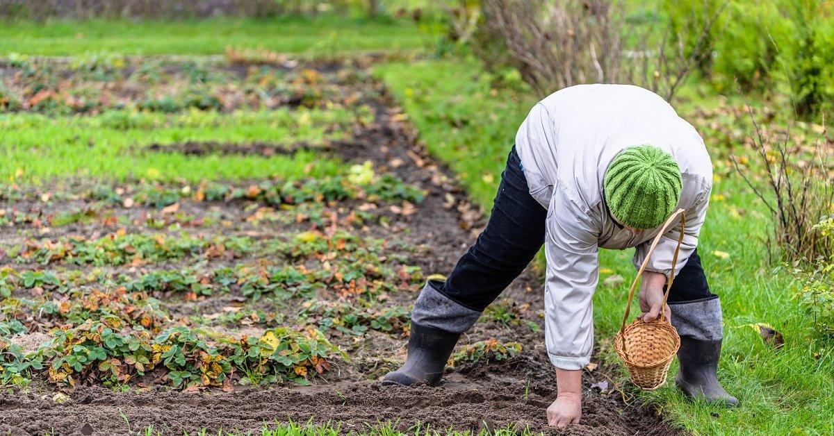 Как посеять астры под зиму: когда можно сажать и какие сорта (семена) подходят для подзимнего посева