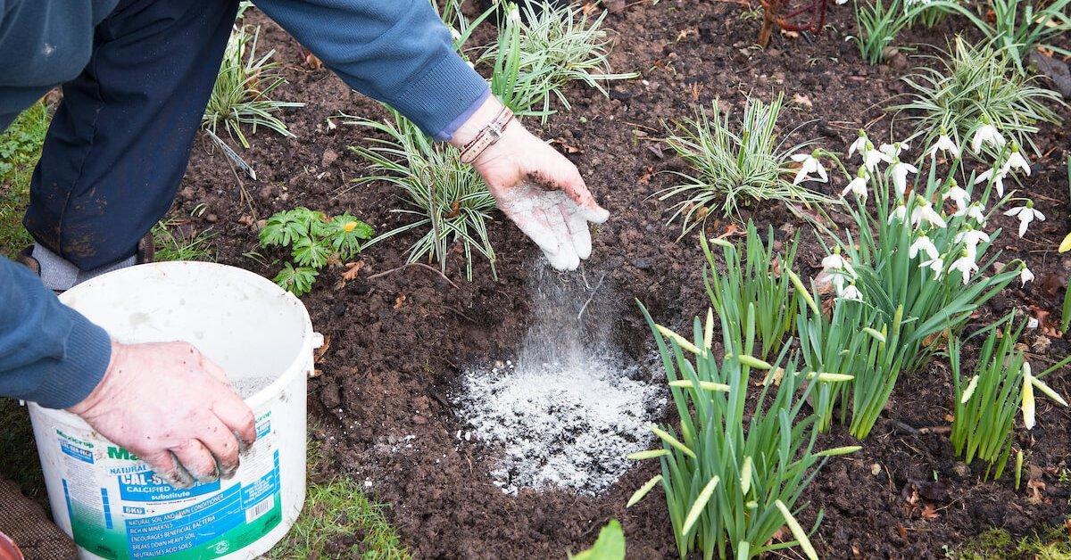 Чем подкормить лилии весной для пышного цветения в саду: удобрения и сроки их внесения