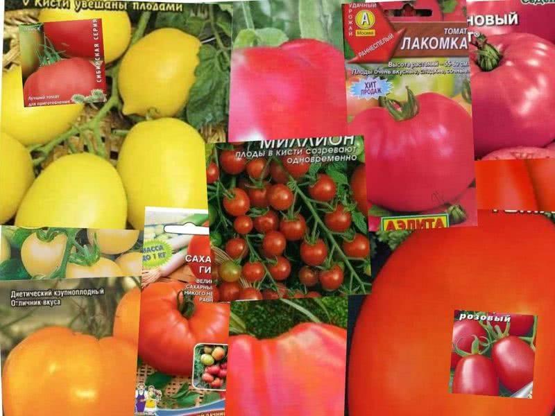 Лучшие сорта томатов для теплицы из поликарбоната для подмосковья, сибири и урала