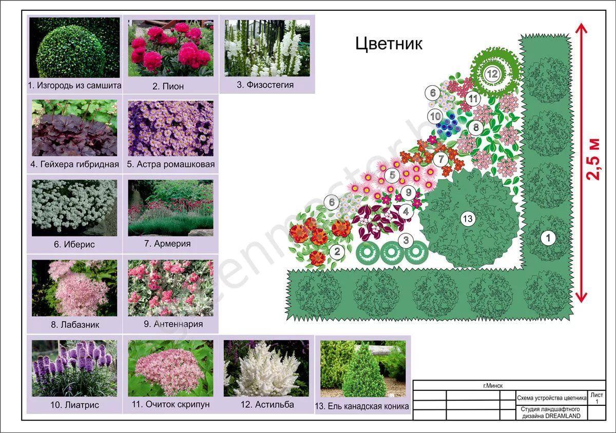 Общие правила составления композиций из комнатных растений