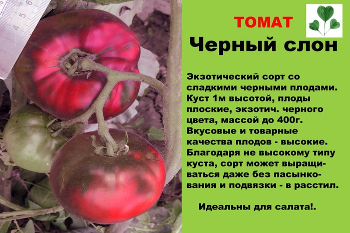 """Томат """"розовый слон"""": характеристика и описание сорта, фото, отзывы"""