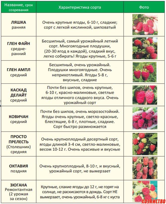 Выращивание клубники круглый год. технология выращивания клубники в теплице.