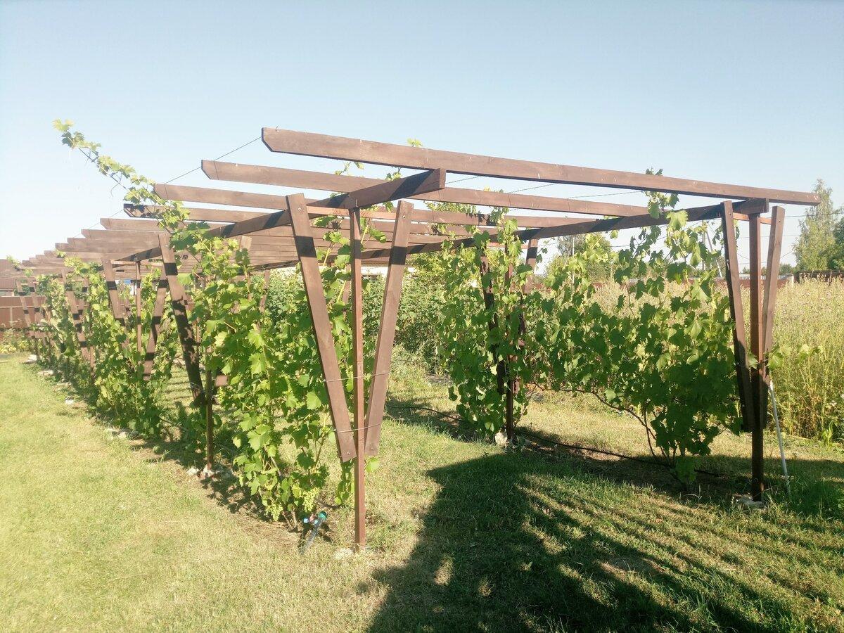 Арка для винограда: как сделать и оформить своими руками