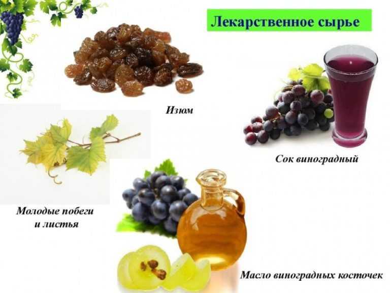 Польза, лечебные свойства и противопоказания к употреблению винограда