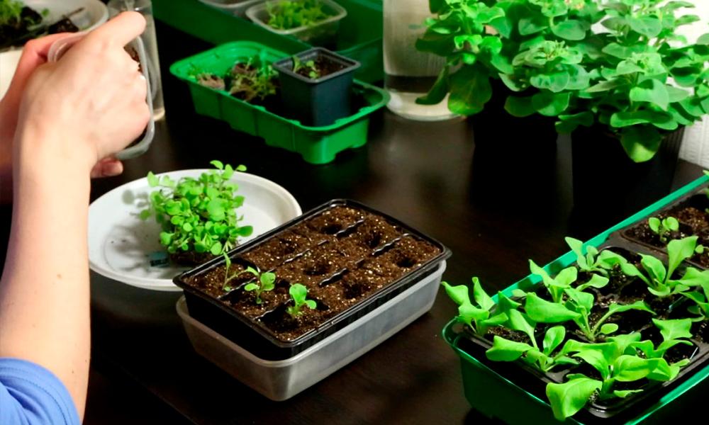 Посев семян в открытый грунт: советы и хитрости