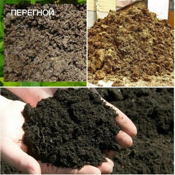 Использование торфа, как удобрения, для картофеля и других культур и его отличия от перегноя