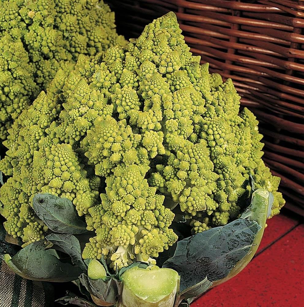 Виды и сорта капусты брокколи с названиями, описанием, фото и отзывами