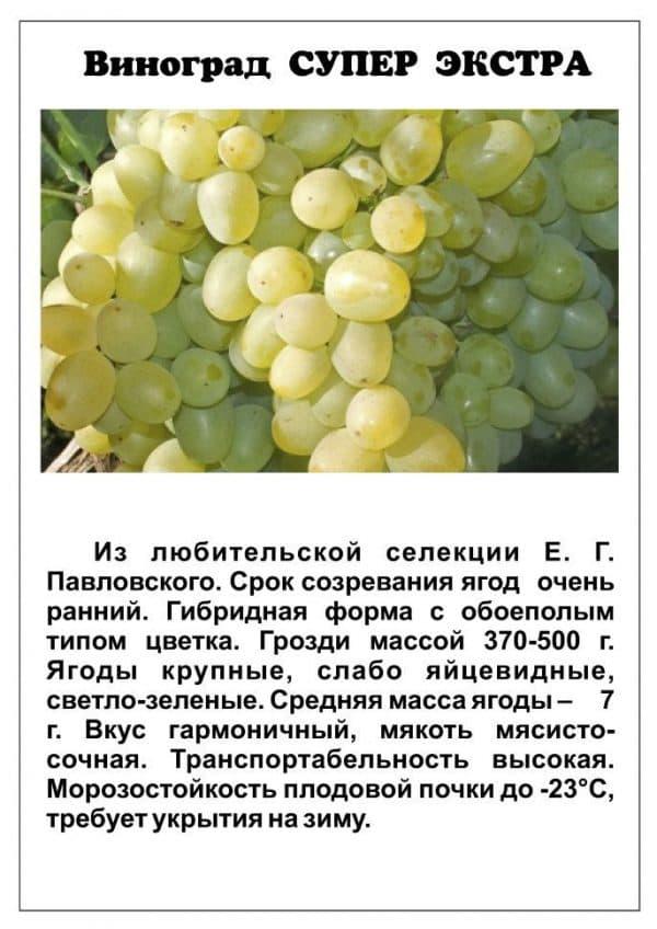 Виноград супер экстра: описание сорта, фото, отзывы, видео