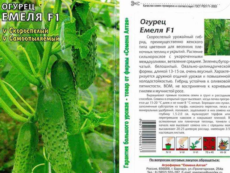 Огурцы кураж f1: описание сорта и выращивание в открытом грунте