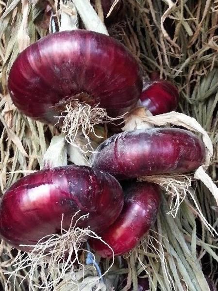 Красный плоский ялтинский лук: как выращивать и его польза для организма