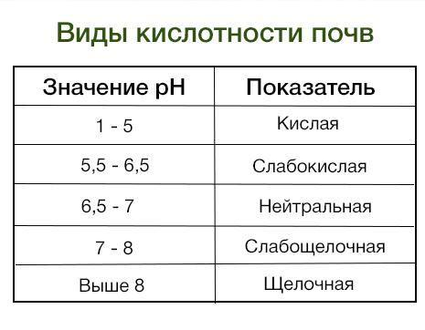 Как определить кислотность почвы на участке
