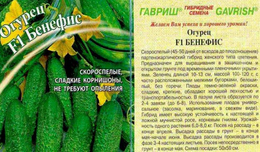 Огурец сибирская гирлянда f1: отзывы, описание сорта, фото