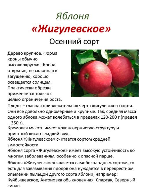 Описание и технология выращивания яблони сорта Вишневое