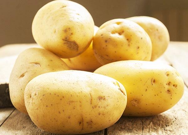 Описание сорта картофеля коломбо, особенности выращивания и ухода