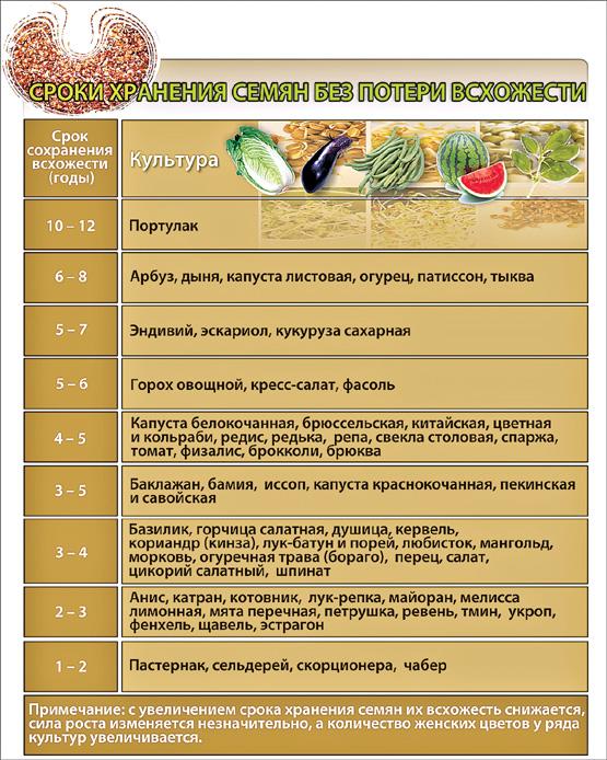 Через сколько дней всходят семена помидоров, как проверить всхожесть семян томатов в соленой воде и какой у них срок годности