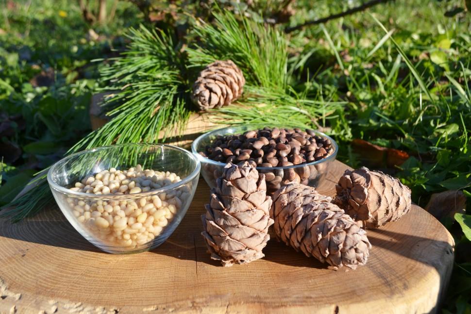 7 рецептов самогона на кедровых орешках: пропорции на 1 и 3 литра