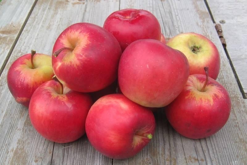 Яблоня благая весть: описание и характеристика сорта, посадка и выращивание